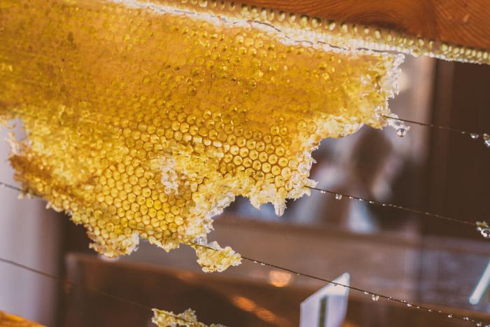 Las abejas de miel y Los humanos, una larga coexistencia con un futuro incierto