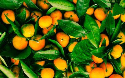 Problematica de los asentamientos de colmenas en citrico «La Pinyola»
