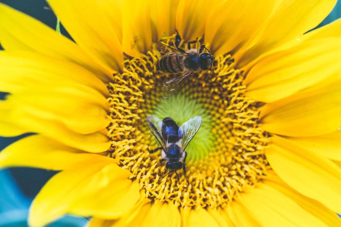 Historia de la apicultura evolucion y conceptos basicos