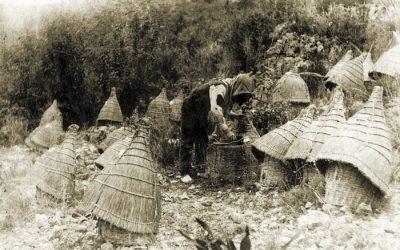 Una visión histórica de los inicios de la apicultura en el País Valenciano