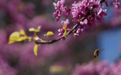Importancia de las abejas meliferas y otros insectos como agentes polinizadores de las plantas cultivadas y silvestres de la Comunidad Valenciana