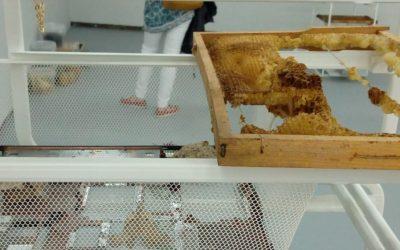 Something Happened: arte y apicultura.