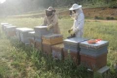 Proyecto de investigación apícola aplicada
