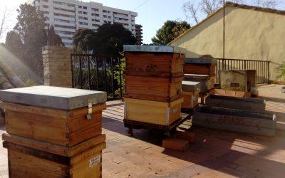 Detectada la «Vespa orientalis» en Valencia