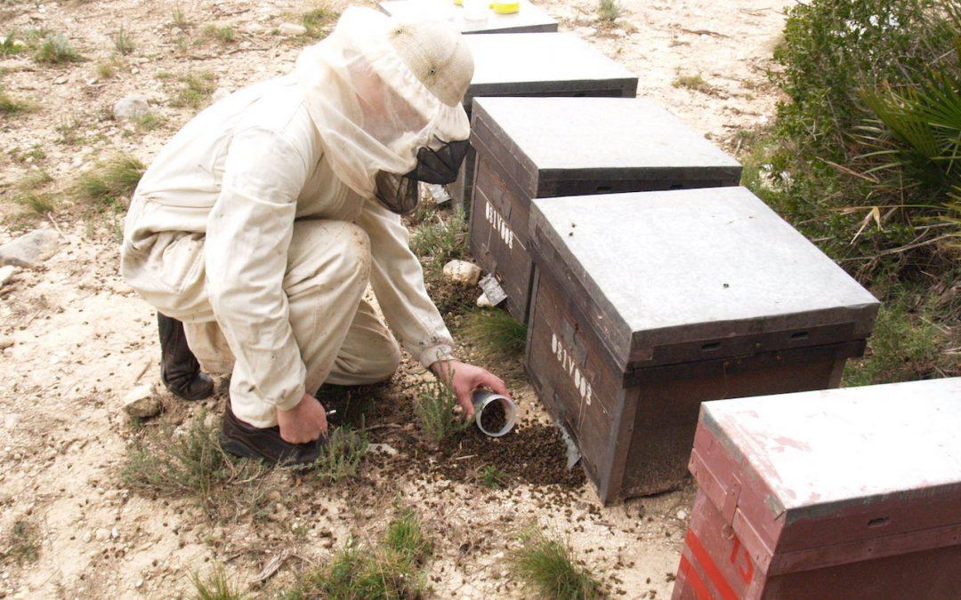 Nueva campaña de control de mortalidad y tratamientos fitosanitarios