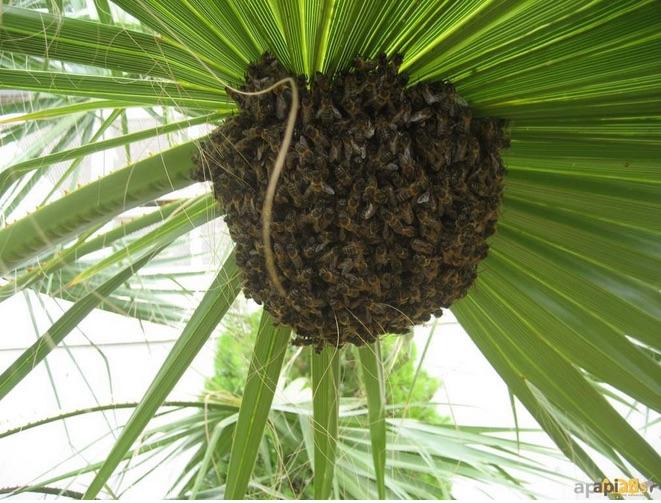 Entrevista «Ya es primavera para las abejas-